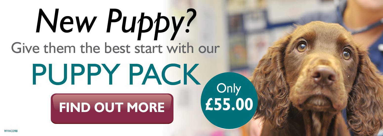 Puppy Pack covering puppy injections, flea & worm treatment, and much more for only £55 at vets in Alsager