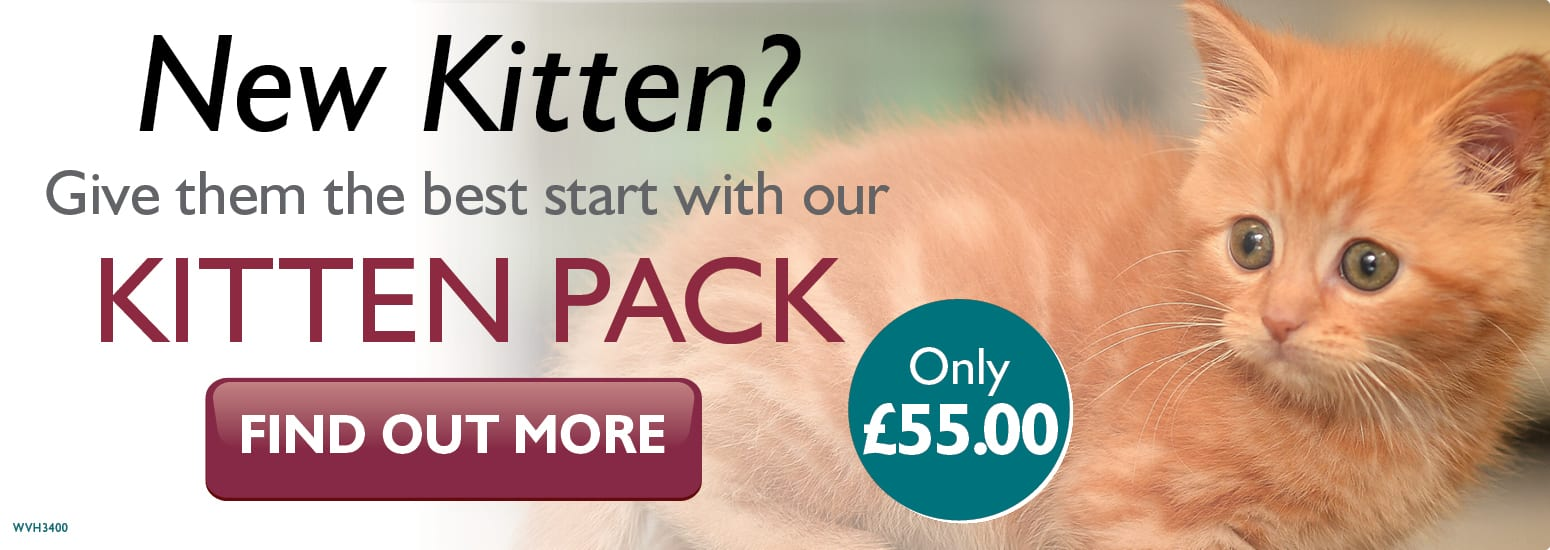 Kitten Pack covering kitten injections, flea & worm treatment, and much more for only £55 at vets in Alsager